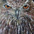 Rings Of Fire, Owl by Sandra Reeves