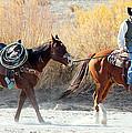Rio Grande Cowboy by Barbara Chichester