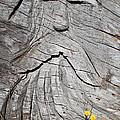 Rip Van Winkle by Tikvah's Hope