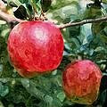 Ripe Red Apples On Tree by Jeelan Clark