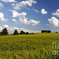 Green Belt Land 2 by John Chatterley