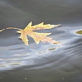 Rippled Maple Leaf by Bonfire Photography