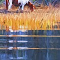Rippled Reflection by Alice Gipson