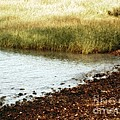 Rippled Water Rippled Reeds by RC DeWinter