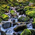 Rippling Rainforest by Gina Herbert