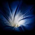Rise And Shine by Matthew Blum
