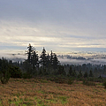 Rising From The Mist by Belinda Greb