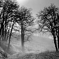 Rising Mists In The Bald Hills by Greg Nyquist