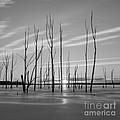 Rising Through The Sticks by Michael Ver Sprill