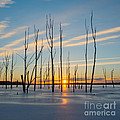 Rising Throught The Sticks by Michael Ver Sprill