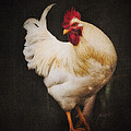 Rita's Rooster by Ron  McGinnis