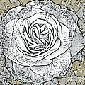 Ritzy Rose With Ink And Taupe Background by Conni Schaftenaar