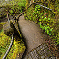 Exploring Columbia River Gorge - Highway 30 by Gary Whitton