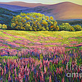 River Bank Lupines In California by Connie Tom