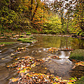 River Blyth In Autumn Vertical by David Head