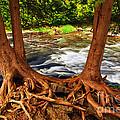 River by Elena Elisseeva