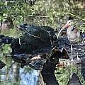 River Guard by Linda Kerkau