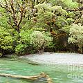 River In Rainforest Wilderness Of Fiordland Np Nz by Stephan Pietzko