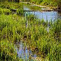 River Kennet Marshes by Mark Llewellyn