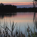 River Murray Sunset Series 2 by Carole-Anne Fooks