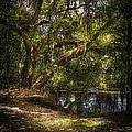 River Oak by Marvin Spates