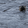 River Otter   #0695 by J L Woody Wooden
