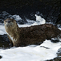 River Otter   #0978 by J L Woody Wooden