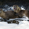 River Otters   #1030 by J L Woody Wooden