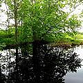 River Reflections by Dancingfire Brenda Morrell