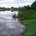 River Reflections by Pat Follett