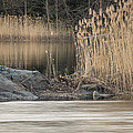 River Rock And Reeds by David Stone