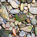River Rocks 2 by Duane McCullough
