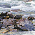 River Rocks by Sharon Talson