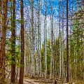 River Run Trail At Arrowleaf by Omaste Witkowski