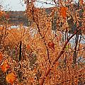 River Side Foliage Autumn by Expressionistart studio Priscilla Batzell