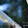 River Spider Web   by Neal Eslinger
