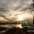 River Sunrise by Brigitte Mueller
