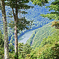 River Thru The Trees by Aimee L Maher ALM GALLERY