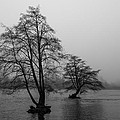 River Trees And Fog by John Daly