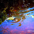 River Turtle by Donna Walsh