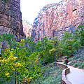 River Walk In Zion Canyon In Zion Np-ut by Ruth Hager