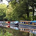 River Wey Navigation by Lana Enderle