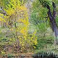 Riverbank Colors by Gary Richards