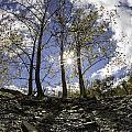 Riverbank Trees by Sara Hudock