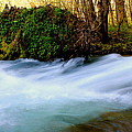 Rivers Edge by Tim Rice