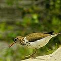 Riverside Bird by John Greaves