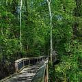 Riverwalk by Skip Willits