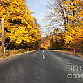 Road In Autumn Forest by Michal Boubin