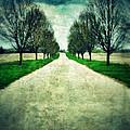 Road Lined By Trees by Jill Battaglia