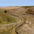 Road On Hierro by Karol Kozlowski